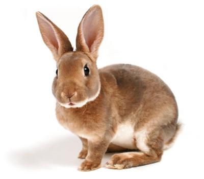 HQ Rabbit Wallpapers | File 65.09Kb