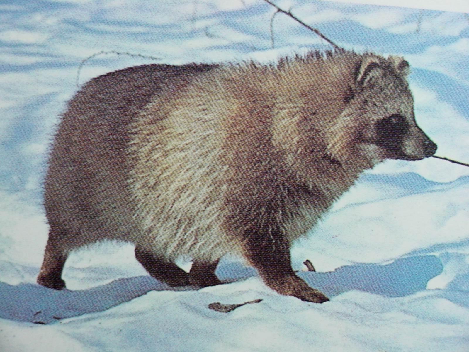 Raccoon Dog #7
