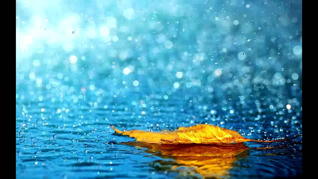 Rain Backgrounds, Compatible - PC, Mobile, Gadgets| 1280x720 px