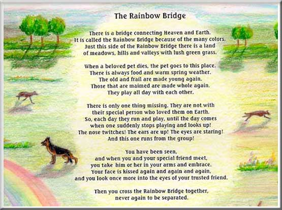 photograph relating to Poem Rainbow Bridge Printable known as Rainbow Bridge wallpapers, Male Developed, HQ Rainbow Bridge