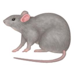 Rat #16