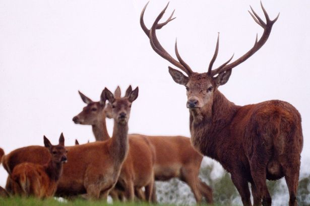 Images of Red Deer | 615x409