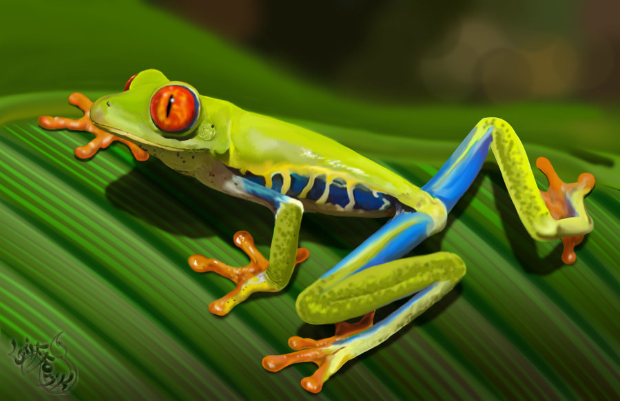900x582 > Red Eyed Tree Frog Wallpapers