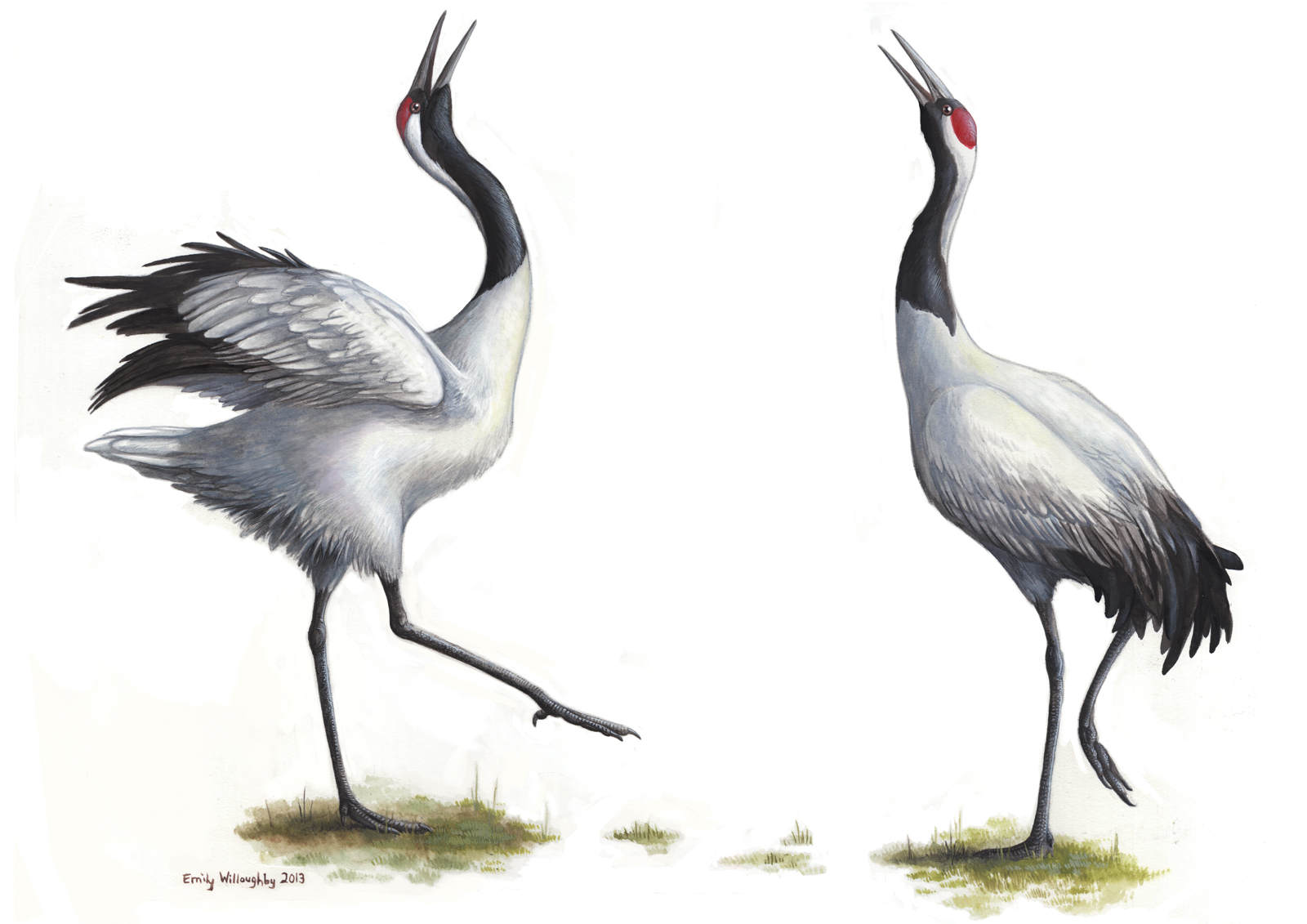 1600x1131 > Red-crowned Crane Wallpapers