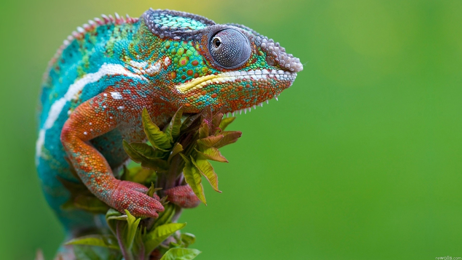 Images of Reptile   1920x1080