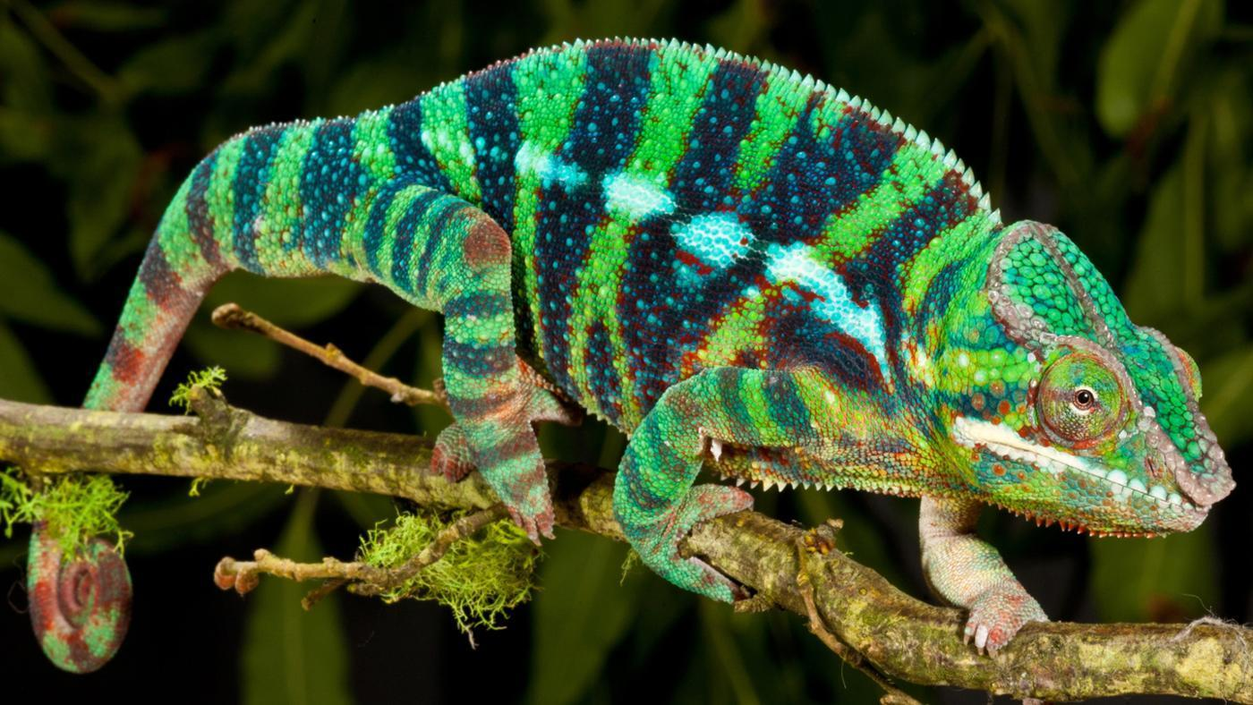Nice Images Collection: Reptile Desktop Wallpapers