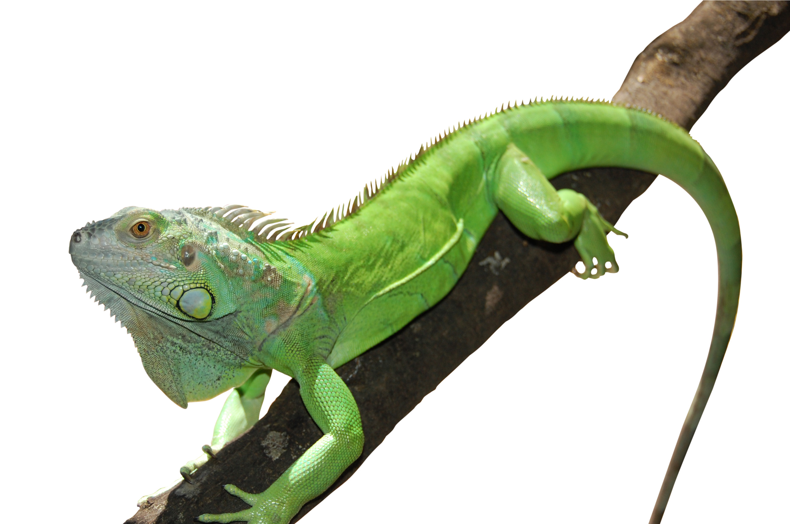 Reptile Pics, Animal Collection