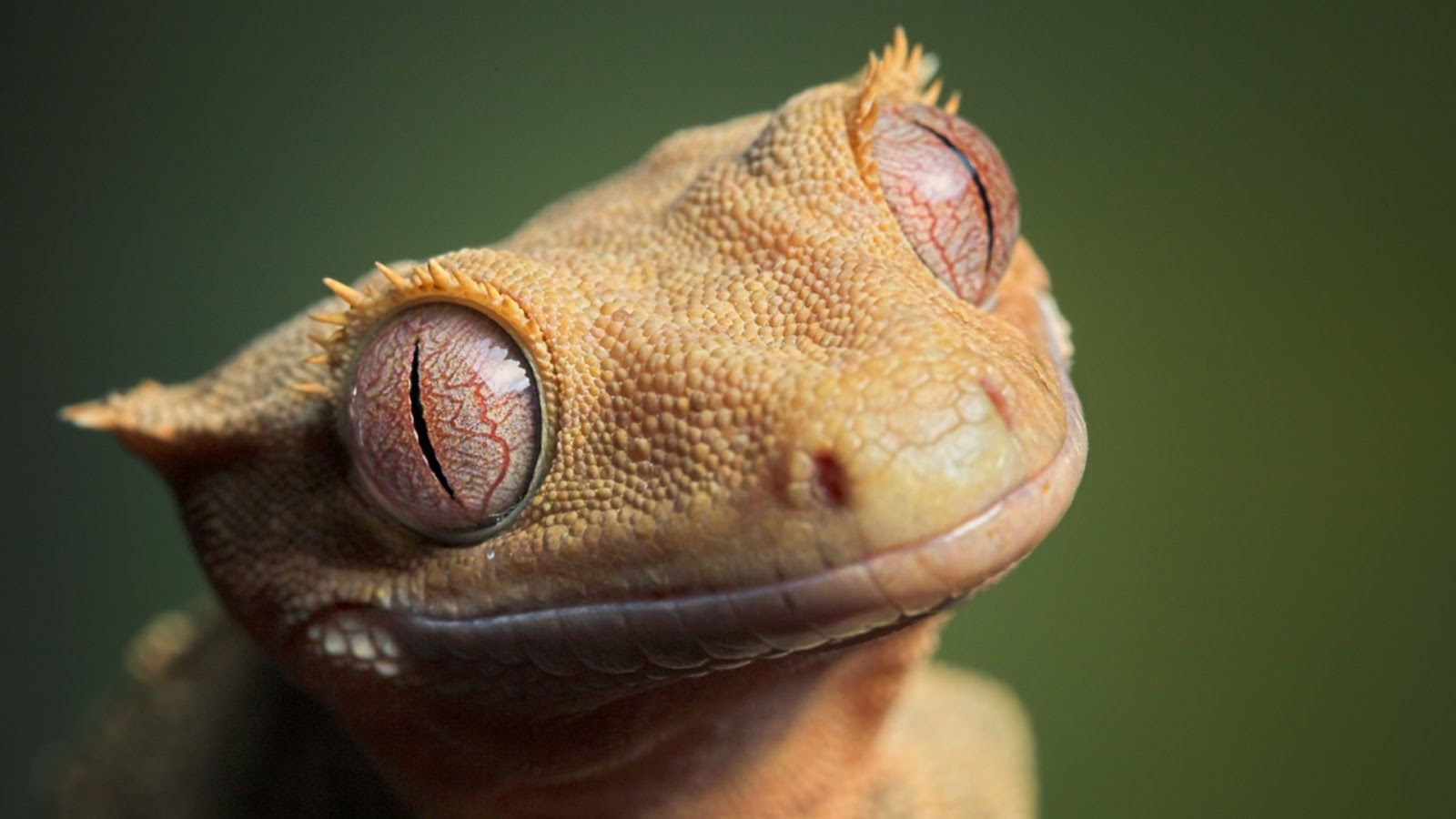 High Resolution Wallpaper   Reptile 1600x900 px