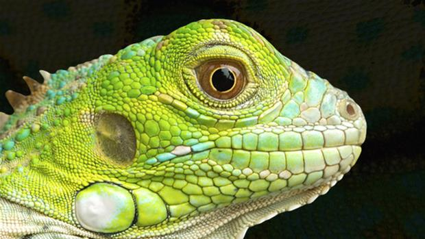 620x349 > Reptile Wallpapers