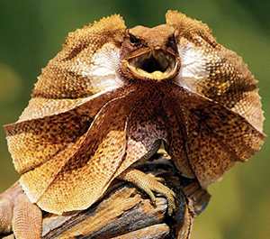 HD Quality Wallpaper   Collection: Animal, 300x265 Reptile
