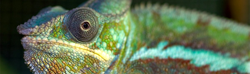 High Resolution Wallpaper   Reptile 956x283 px