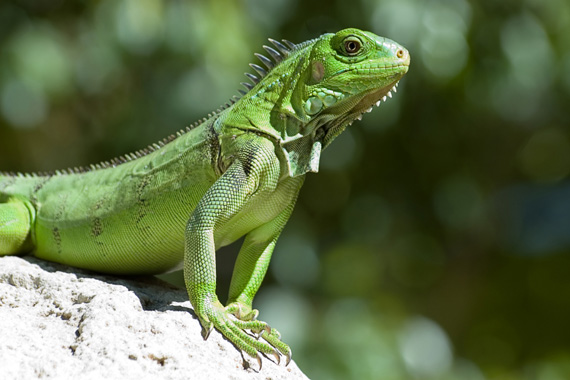 Amazing Reptile Pictures & Backgrounds