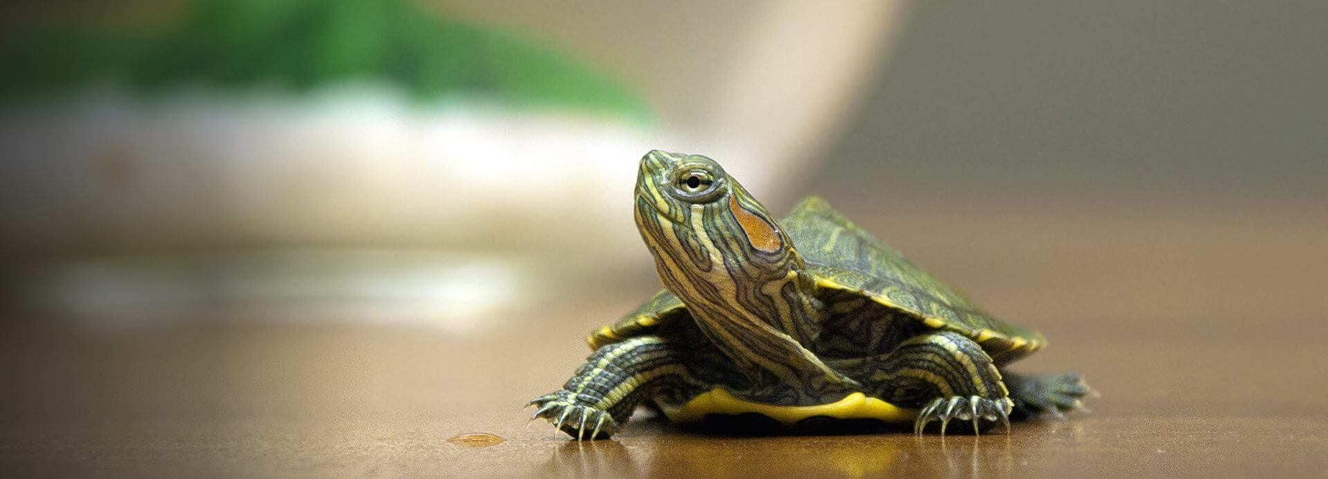 HD Quality Wallpaper   Collection: Animal, 1920x693 Reptile