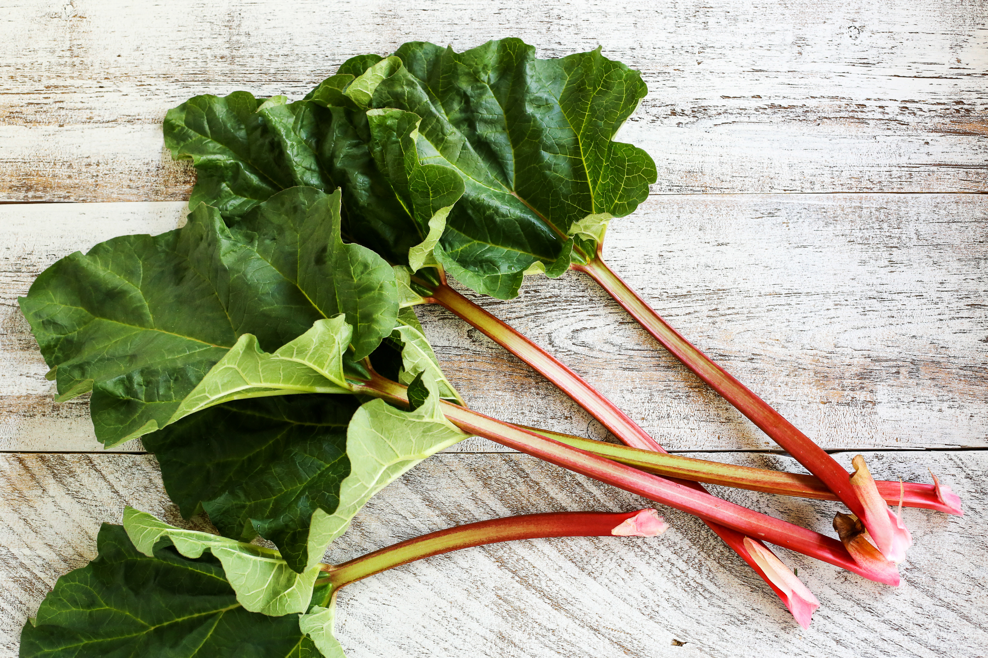 Rhubarb High Quality Background on Wallpapers Vista