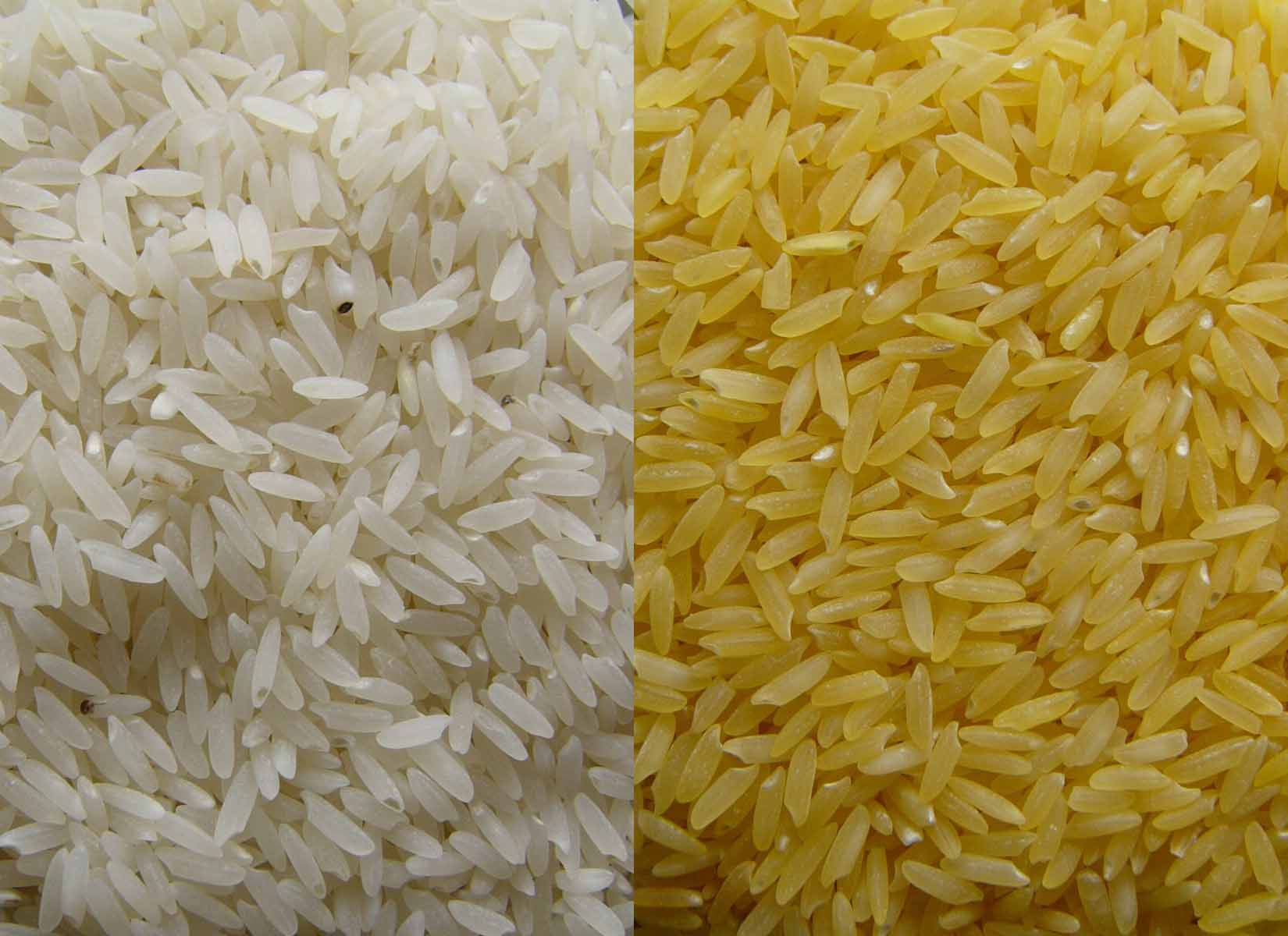 1650x1200 > Rice Wallpapers