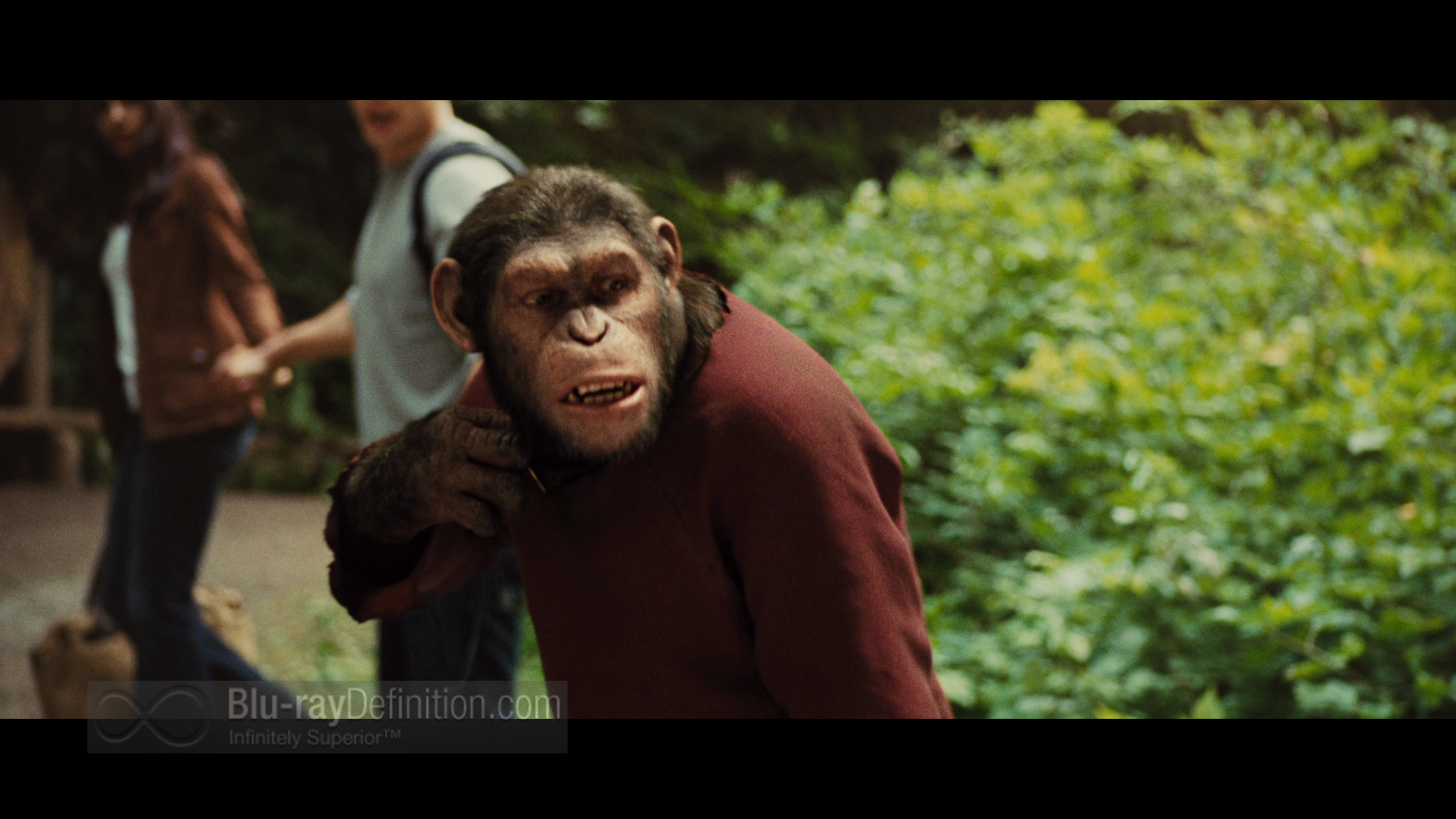 Rise Of The Planet Of The Apes Wallpapers Movie Hq Rise Of The