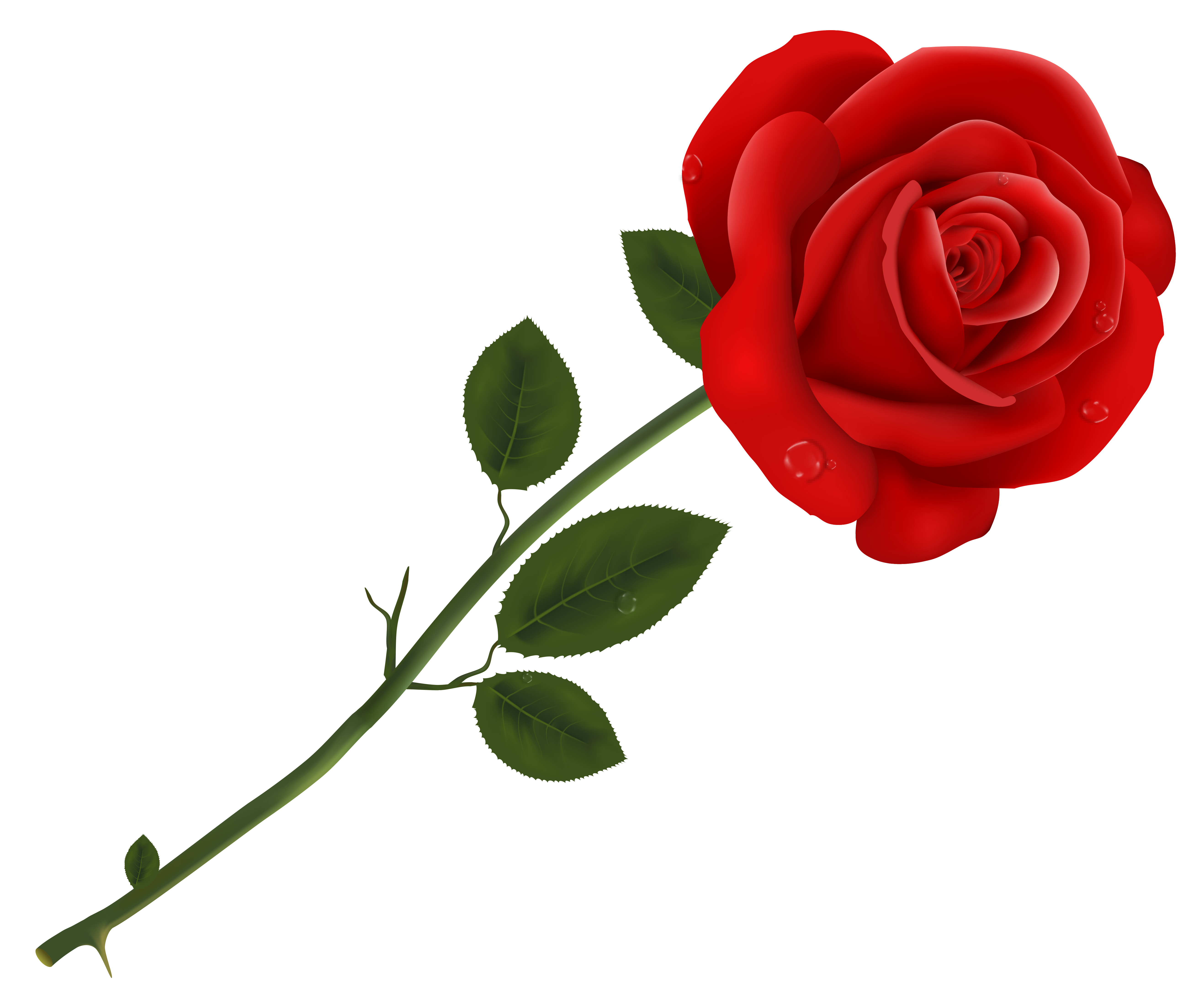 Nice wallpapers Rose 5270x4411px