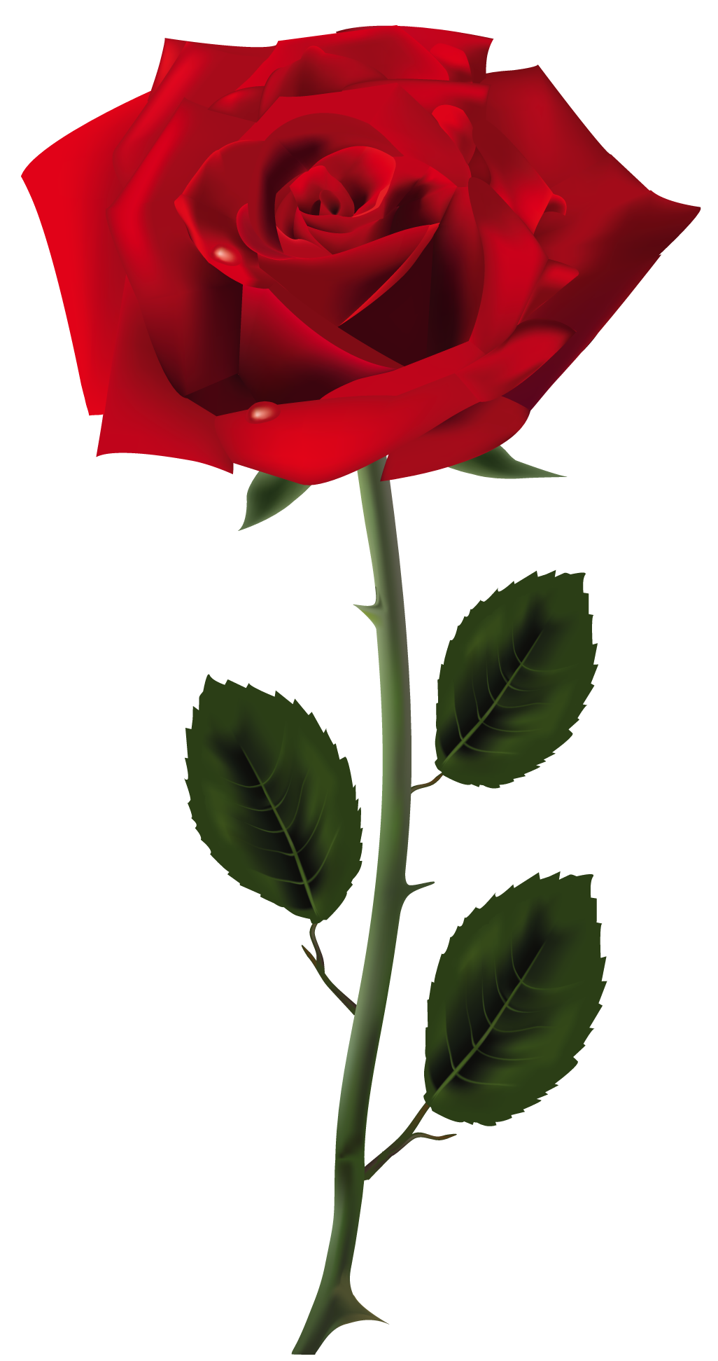 Rose Pics, Artistic Collection