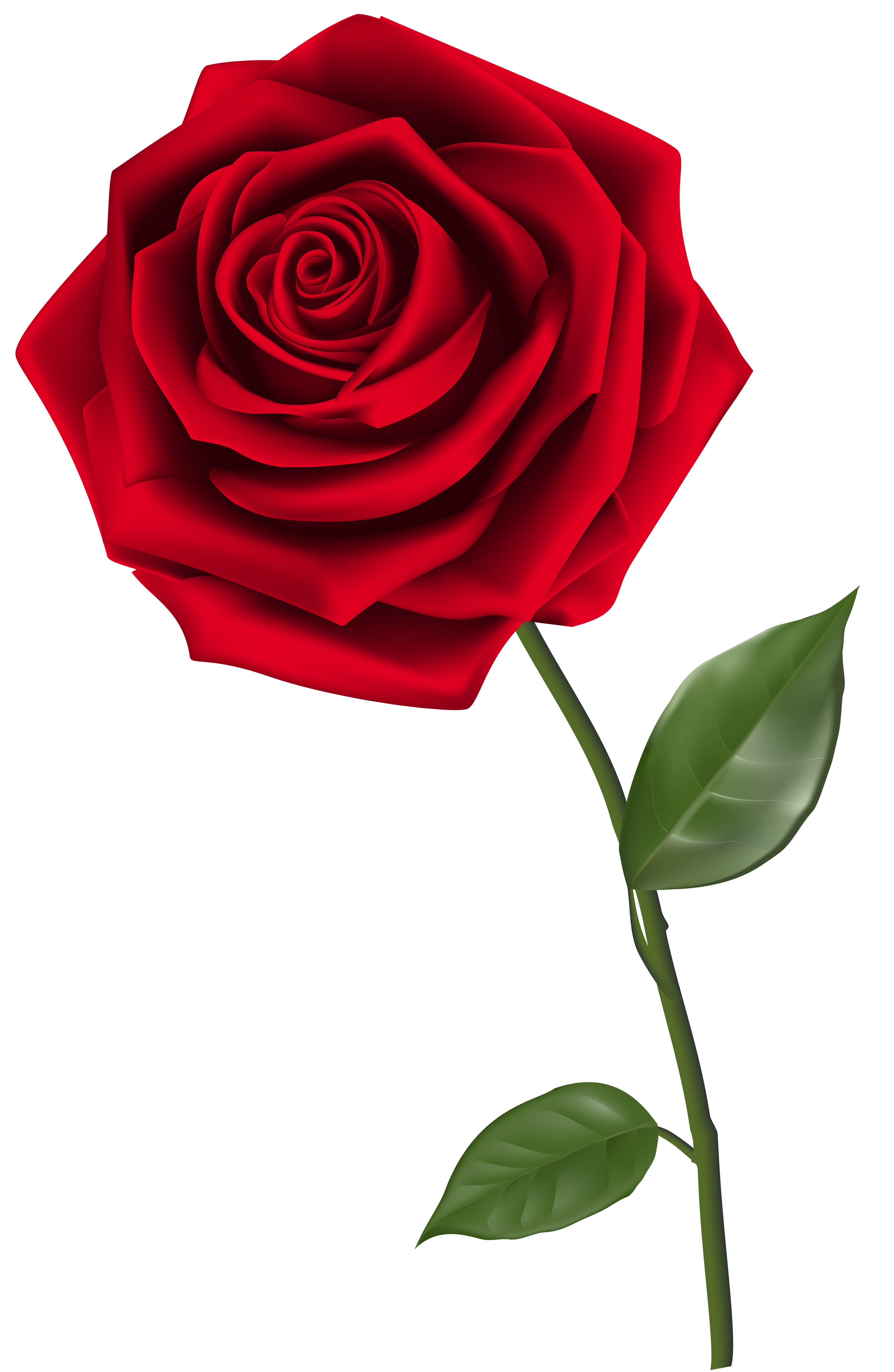 HQ Rose Wallpapers | File 4093.98Kb