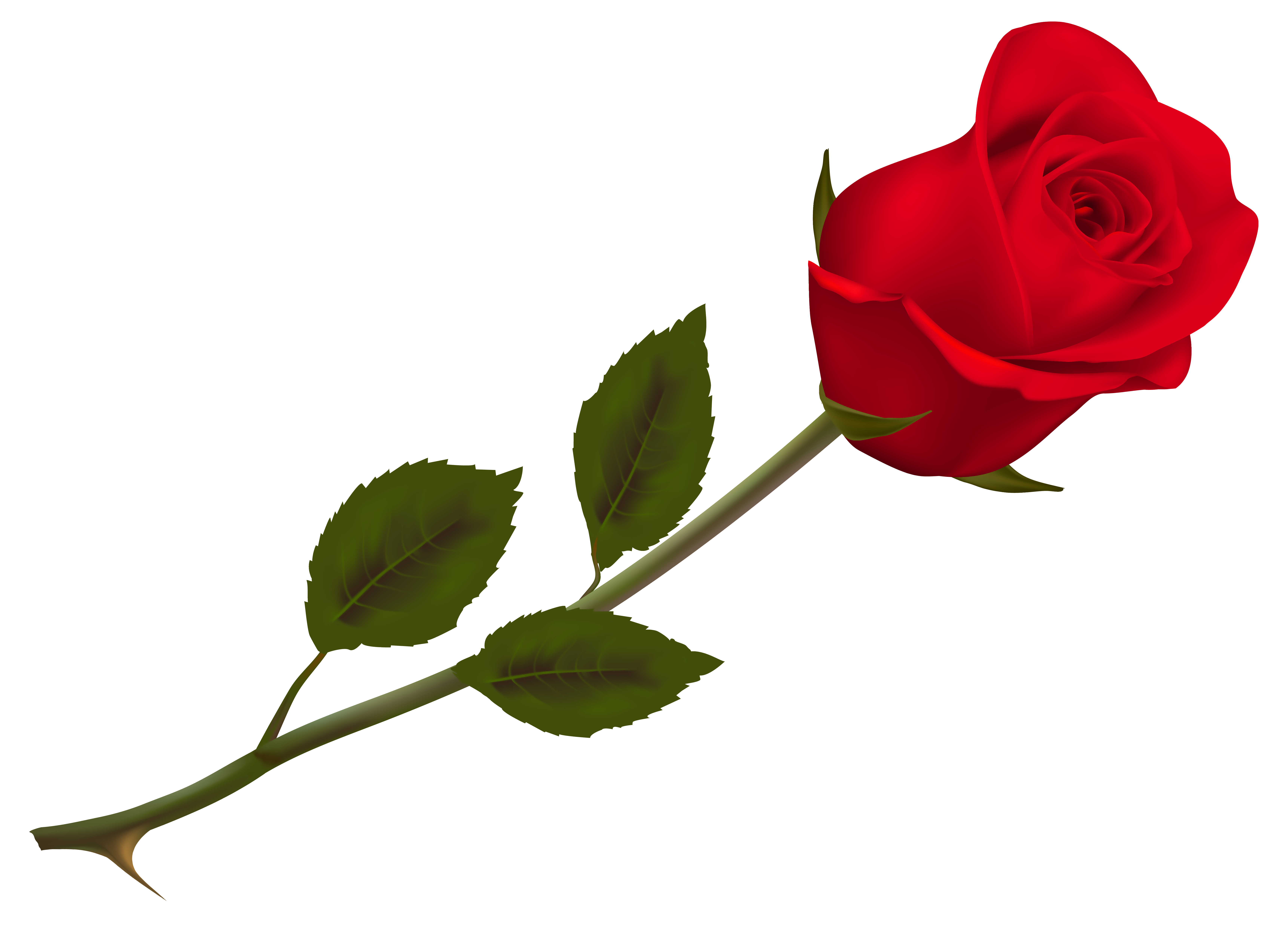HD Quality Wallpaper | Collection: Artistic, 6889x5043 Rose