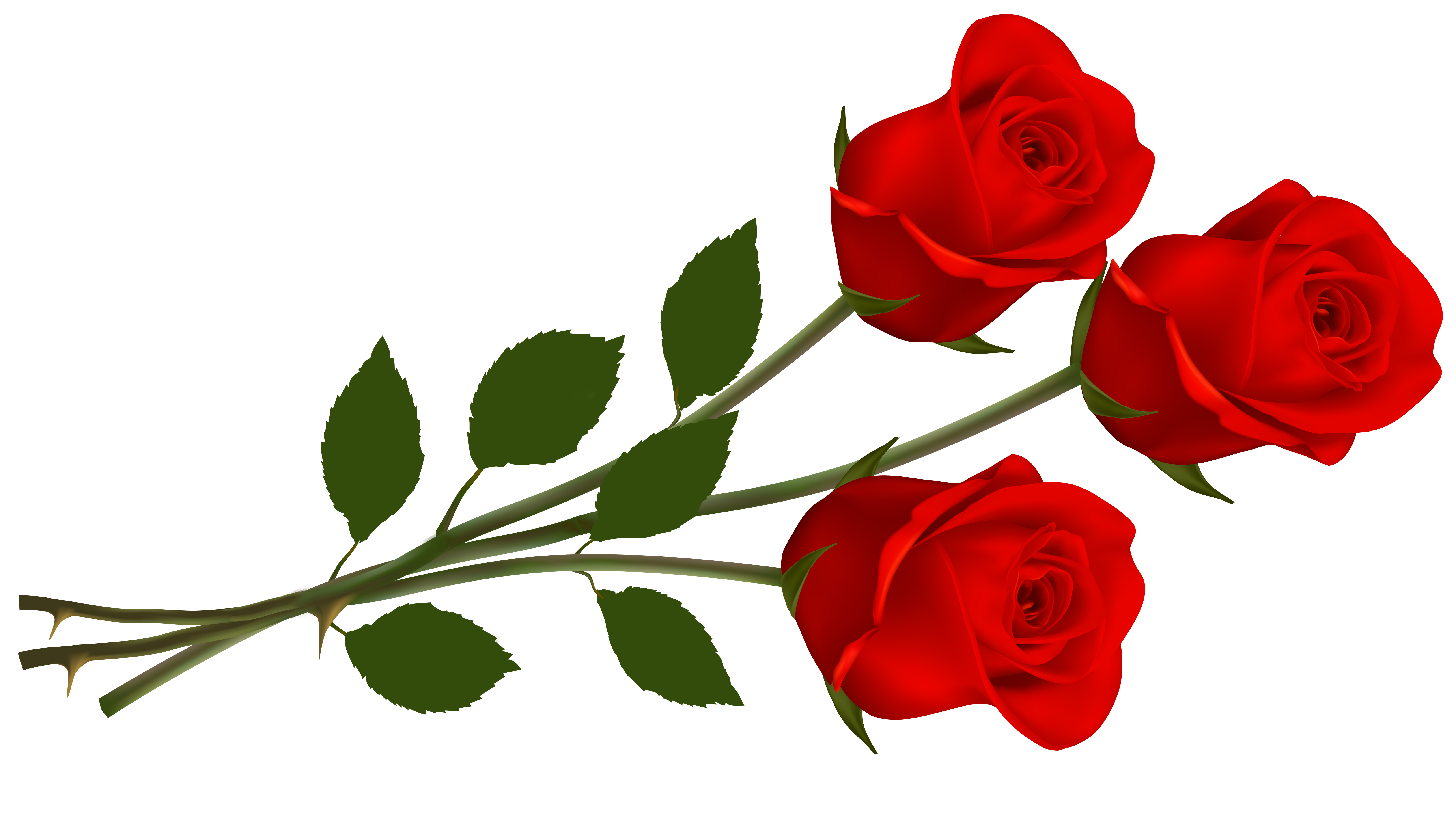 6500x3637 > Rose Wallpapers