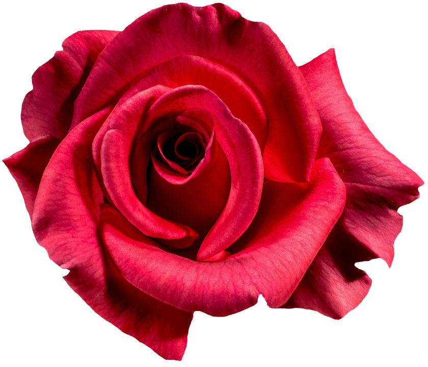 Images of Rose | 840x720