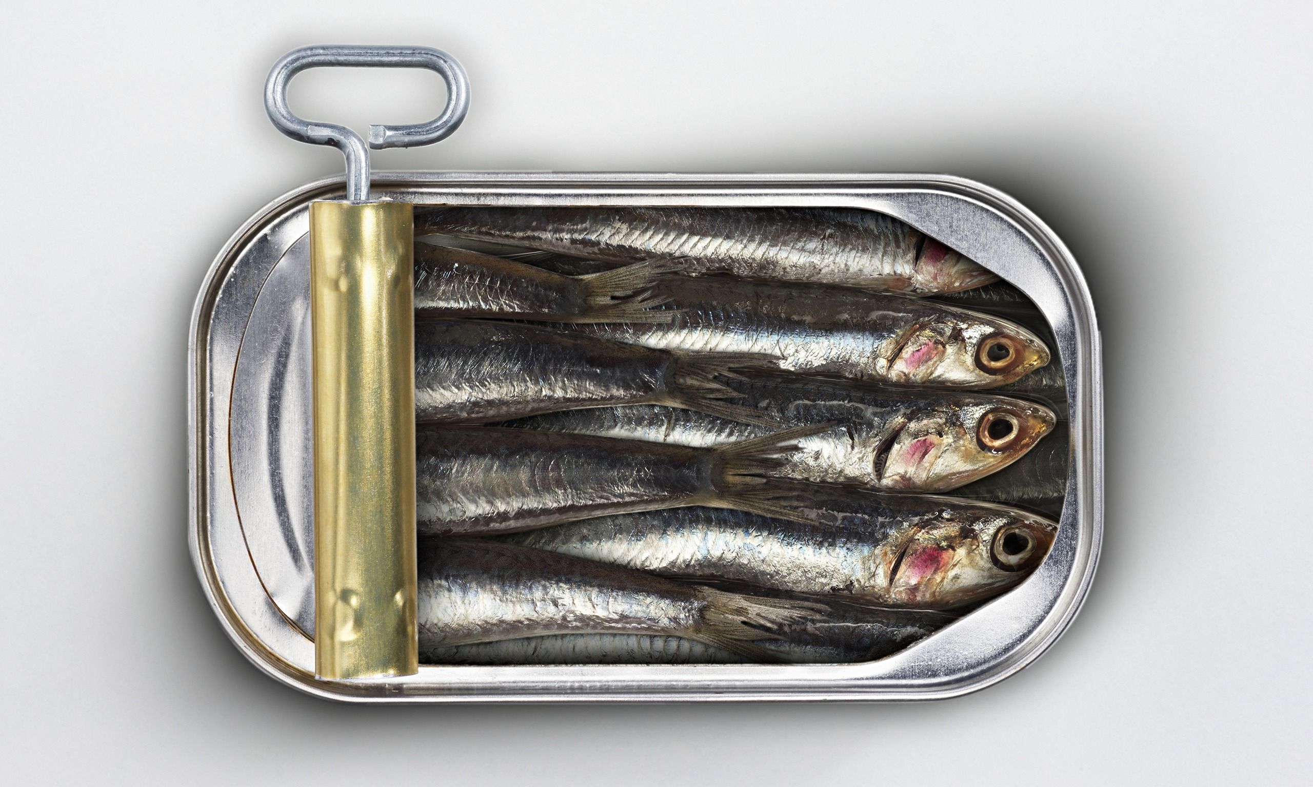 Sardines High Quality Background on Wallpapers Vista
