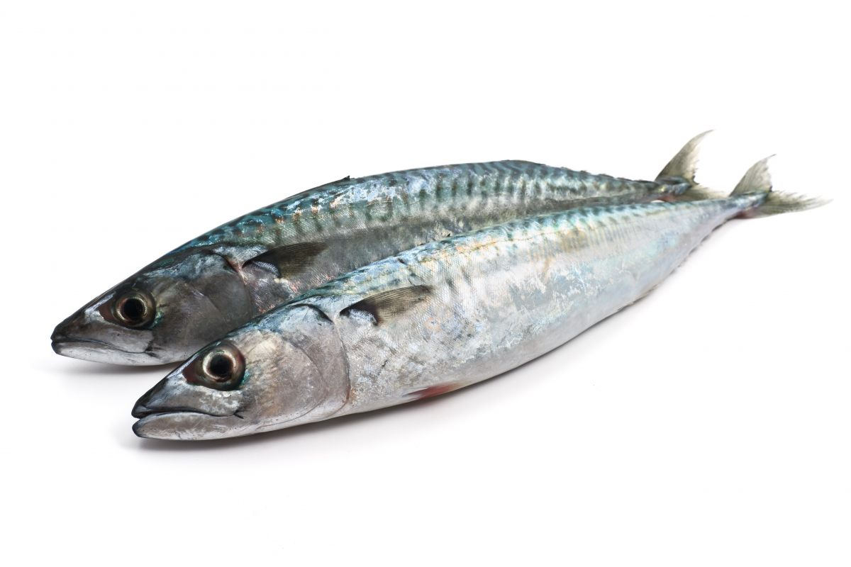 Images of Sardines   1200x800
