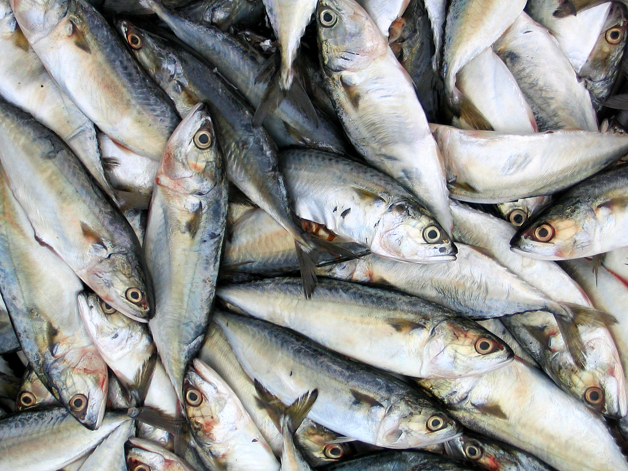 Amazing Sardines Pictures & Backgrounds