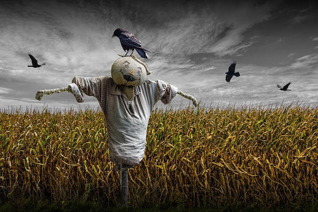 Scarecrow High Quality Background on Wallpapers Vista