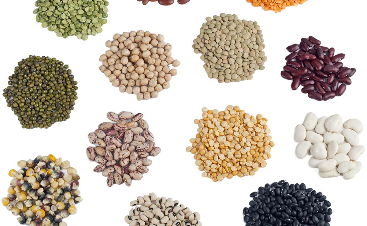 Seed Pics, Food Collection