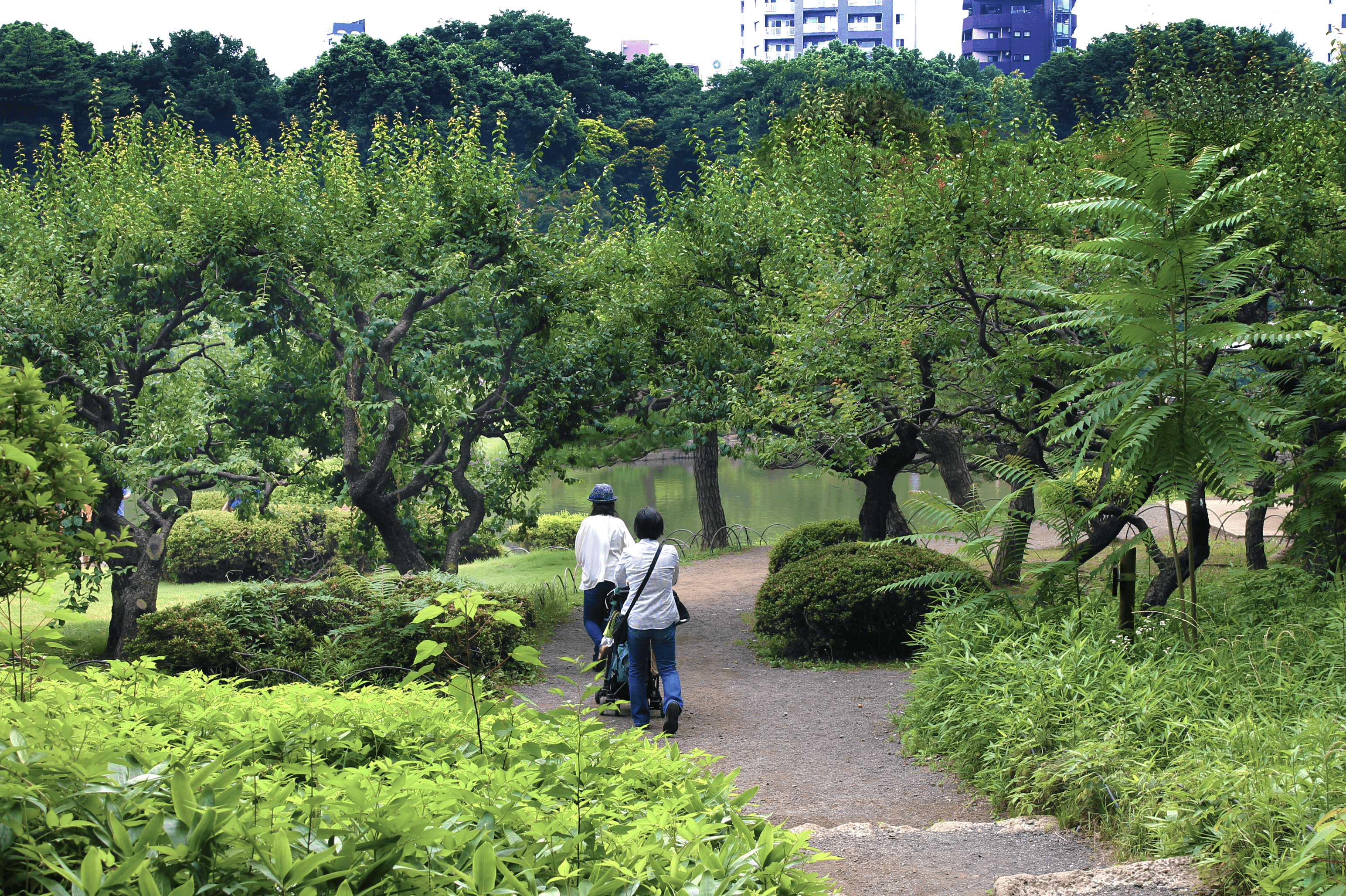 HQ Shinjuku Gyoen Garden Wallpapers | File 3858.29Kb