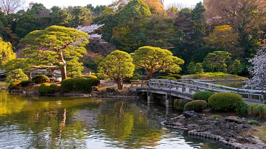 Shinjuku Gyoen Garden Backgrounds, Compatible - PC, Mobile, Gadgets| 525x294 px