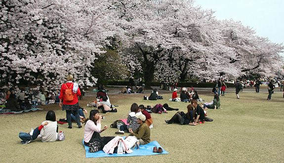 Shinjuku Gyoen Garden Backgrounds, Compatible - PC, Mobile, Gadgets| 575x330 px