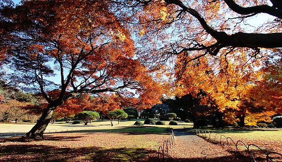 Nice wallpapers Shinjuku Gyoen Garden 575x330px