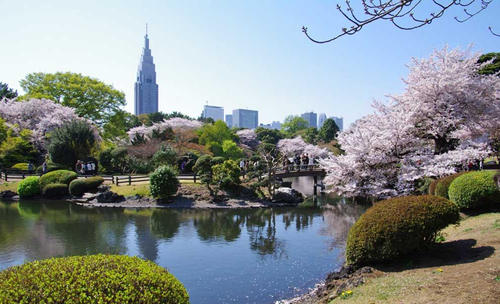Nice Images Collection: Shinjuku Gyoen Garden Desktop Wallpapers