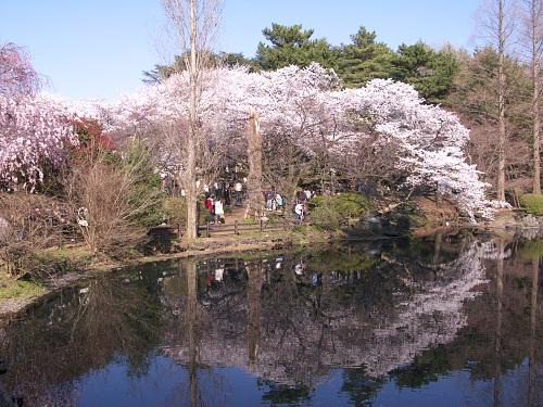 Amazing Shinjuku Gyoen Garden Pictures & Backgrounds