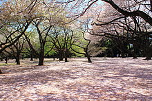 HD Quality Wallpaper | Collection: Photography, 220x147 Shinjuku Gyoen Garden