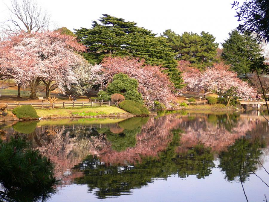 Images of Shinjuku Gyoen Garden | 900x675
