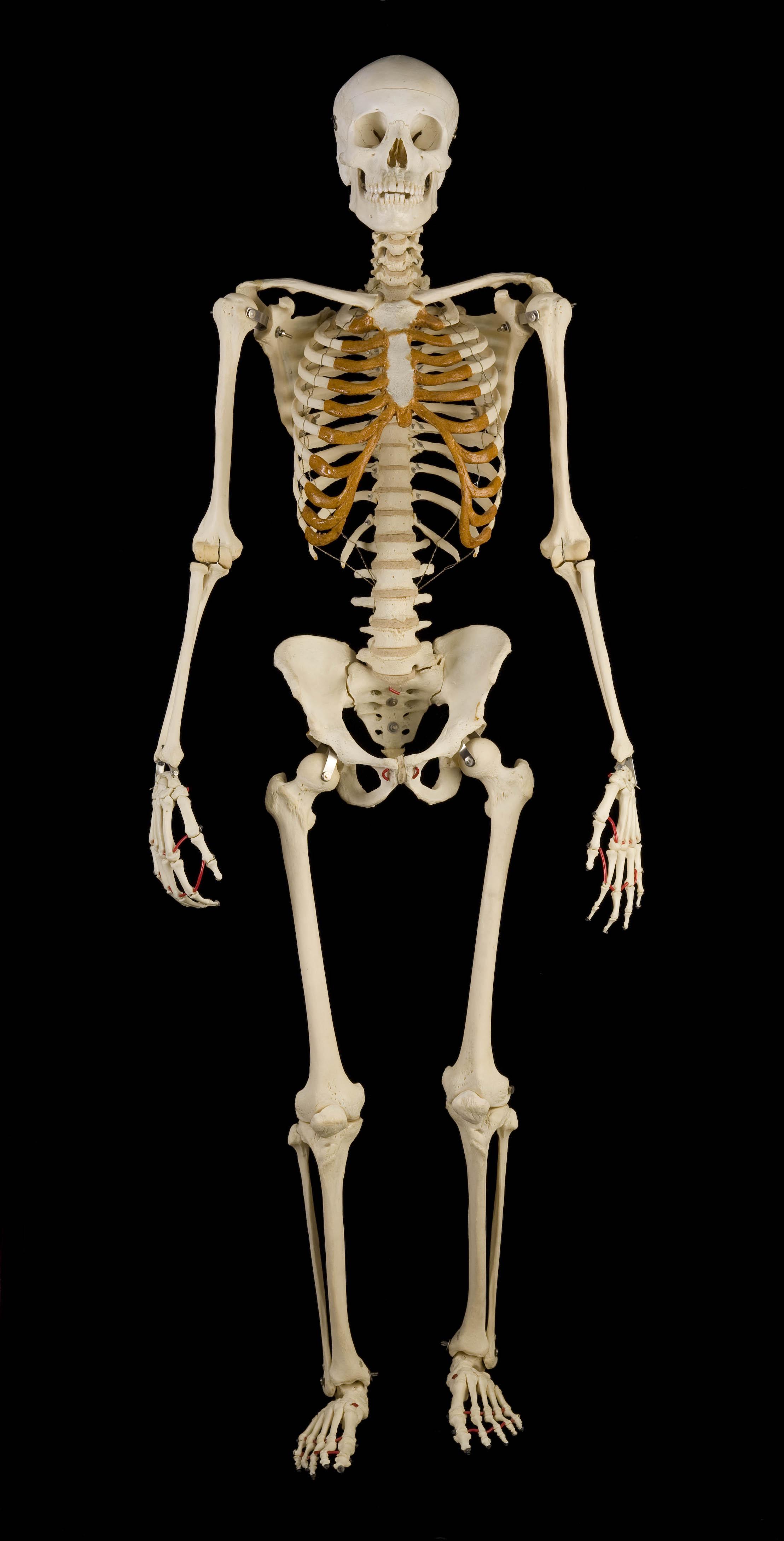 2217x4356 > Skeleton Wallpapers