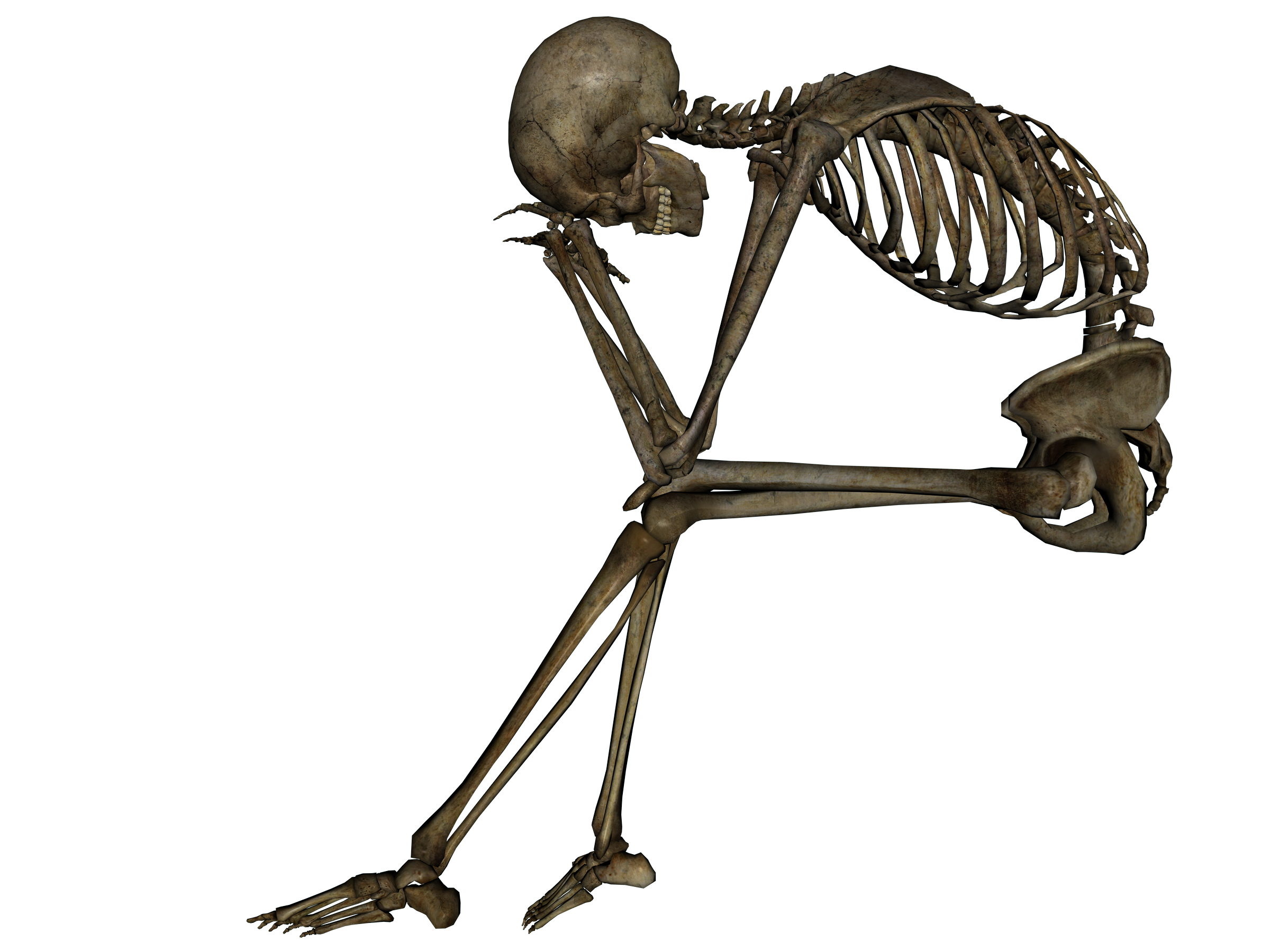 HD Quality Wallpaper   Collection: Animal, 2400x1800 Skeleton