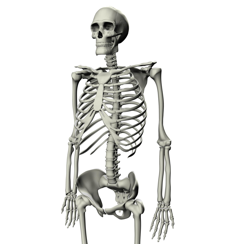Images of Skeleton   1396x1500