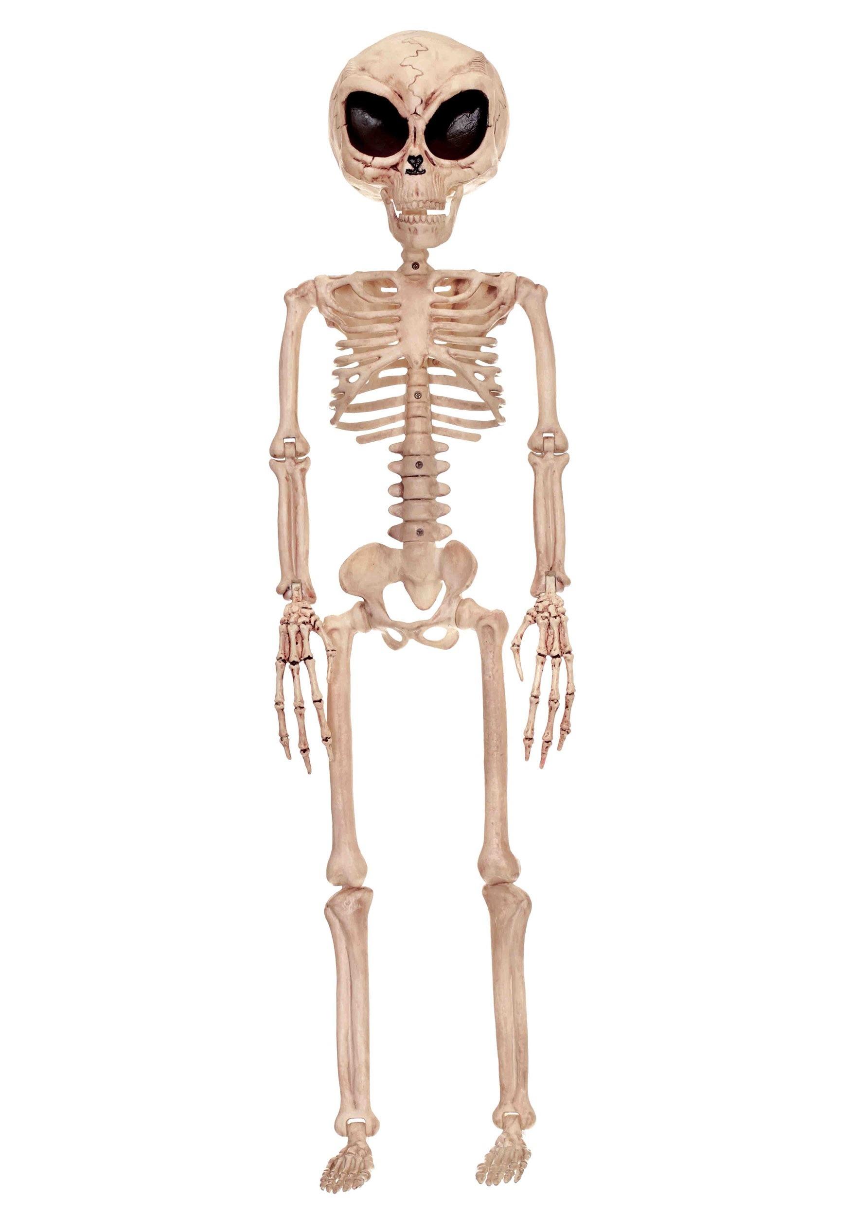 Skeleton Backgrounds on Wallpapers Vista