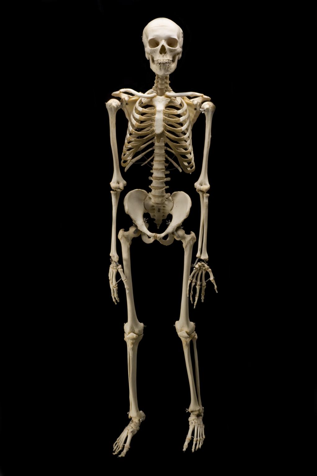 Nice Images Collection: Skeleton Desktop Wallpapers