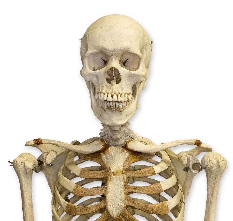 Skeleton Backgrounds, Compatible - PC, Mobile, Gadgets  900x854 px