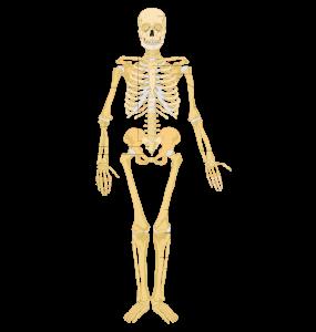 HQ Skeleton Wallpapers   File 35.52Kb