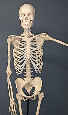 High Resolution Wallpaper   Skeleton 220x369 px