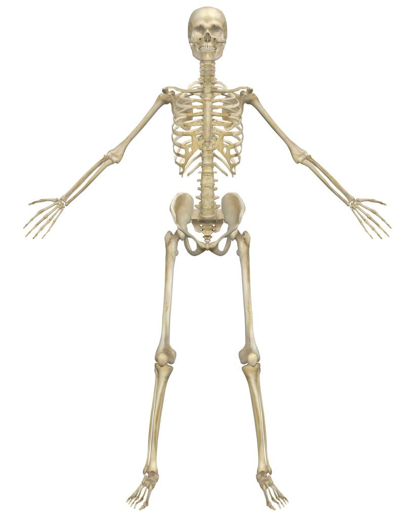 Images of Skeleton   819x1024
