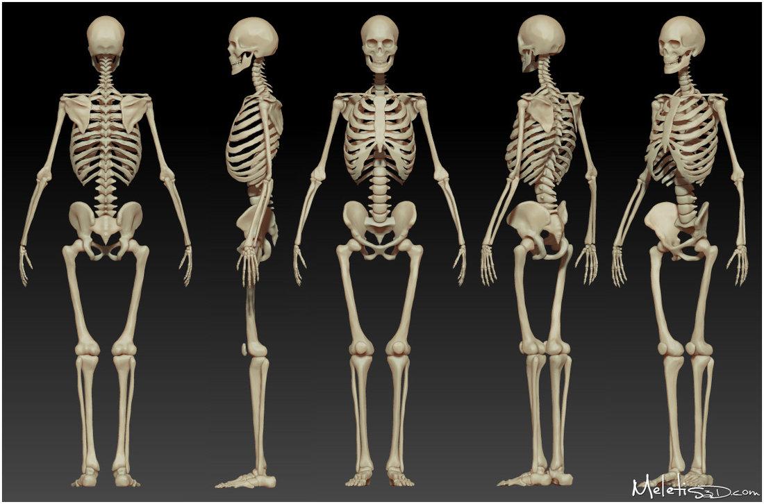 High Resolution Wallpaper   Skeleton 1100x726 px