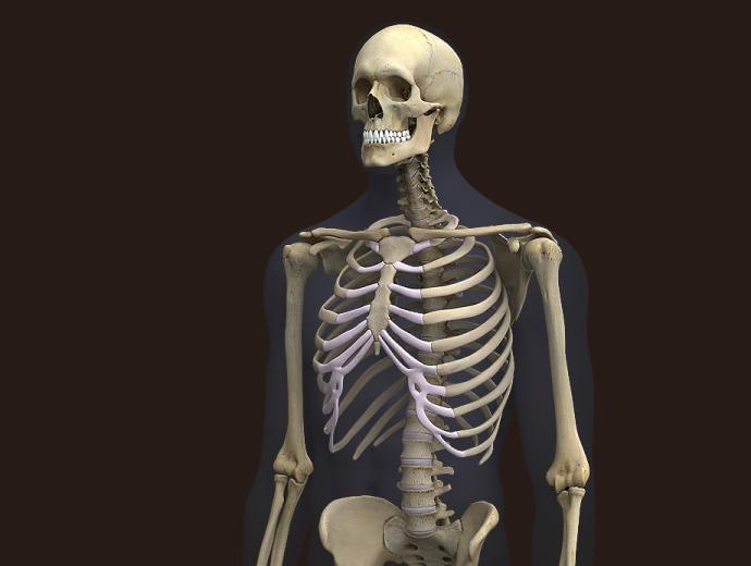 HQ Skeleton Wallpapers   File 131.32Kb